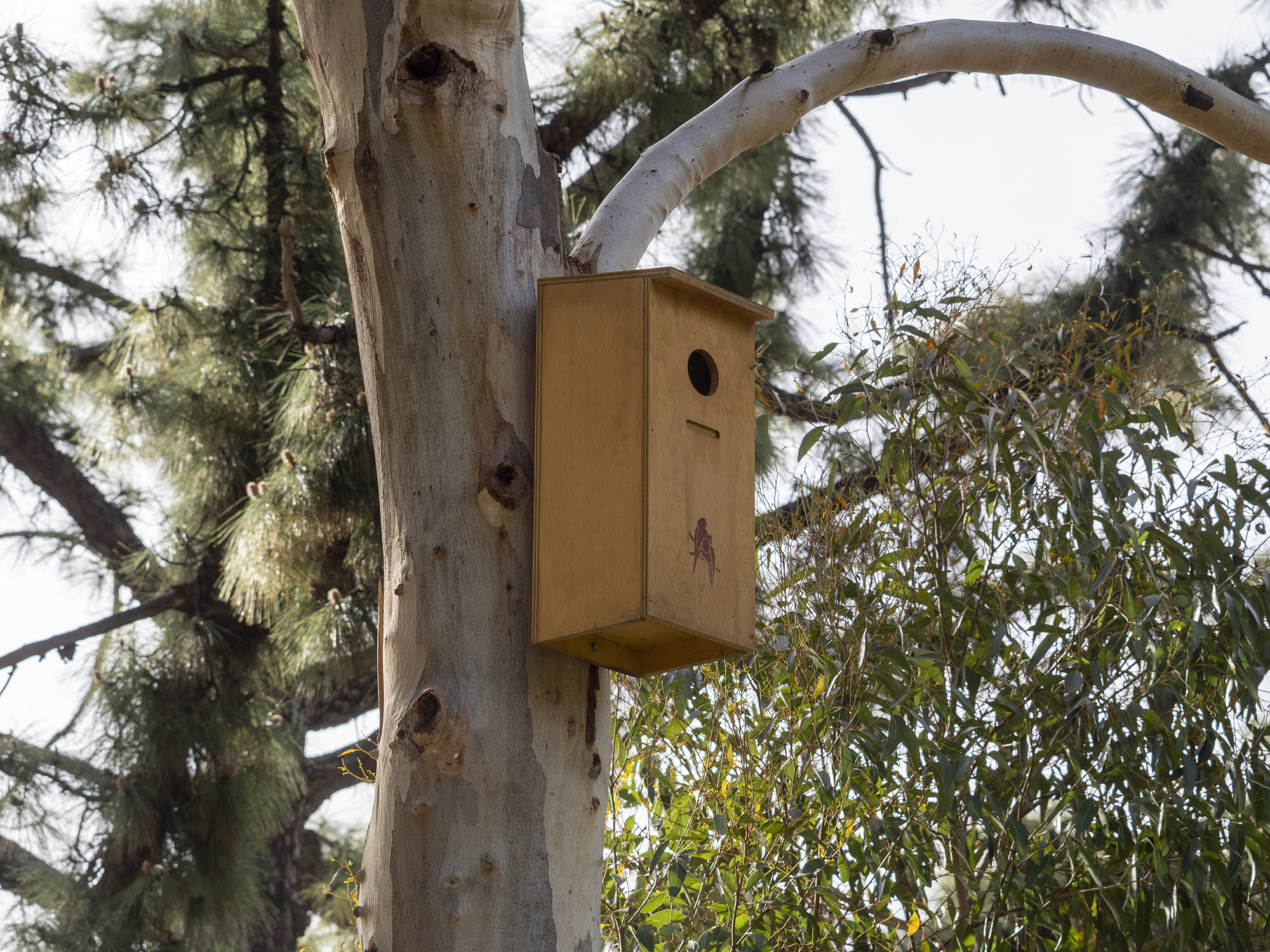 Nest boxes and integrated sensors